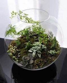 15 Glass Terrariums - A Collection of Translucent Vivariums That'll Transform Any Room