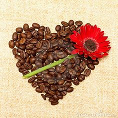 Heart - Coffee And Red Flower On Background Stock Image - Image: 20534561