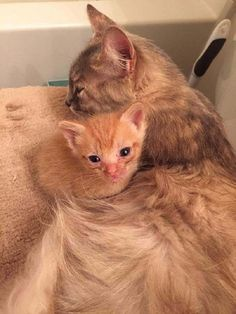 GRIEVING MAMMA CAT AND ABANDONED KITTEN ADOPT EACH OTHER
