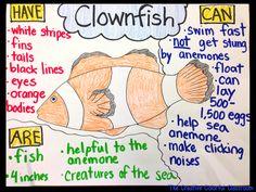 Clownfish Anchor Chart!