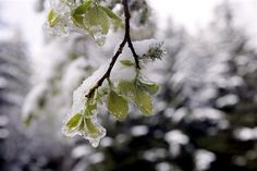 Il a neigé cette nuit sur les Vosges. Une neige de printemps très tardive qui plonge les sommets vosgiens dans la brume et le froid hivernal. La limite de la neige se situe à la hauteur du lac Blanc. Au col du Calvaire à 1144 m, les pistes de ski de la Montjoie sont recouvertes de 5 cm de neige. Spectacle insolite et exceptionnel pour un 24 mai.