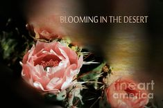 Blooming In The Desert by Beverly Guilliams