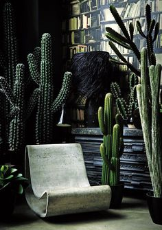 Dark interior and an abundance of cacti!