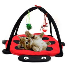 Wildgirl Cute Red and Black Ladybug Pattern Cat Activity Play Mat Pet Bed with Hanging Toys Bells Balls and Mice * Check this awesome product by going to the link at the image. (This is an affiliate link) #Cats