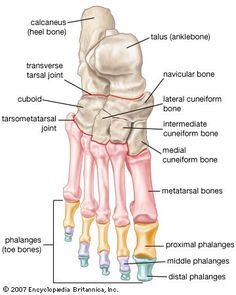 Footbones. Unidad Especializada en Ortopedia y Traumatologia www.unidadortopedia.com PBX: 6923370 Bogotá, Colombia.