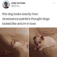 funny dogs memes Why Not Have A Happy Doggo Dump? - Why Not Have A Happy Doggo Dump? Funny Animal Memes, Dog Memes, Cute Funny Animals, Cute Baby Animals, Funny Cute, Really Funny, Funny Dogs, Funny Memes, Animal Jokes