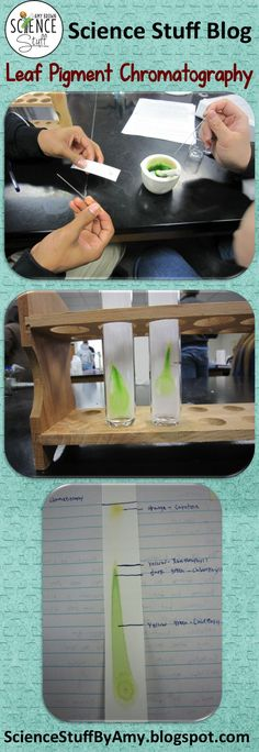 Blog Post from Science Stuff:  Leaf Pigment Chromatography