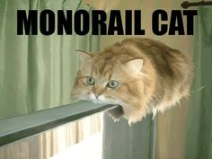 Monorail cat ... Has left the station
