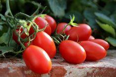 Koktélparadicsom - Sunstream Red Grapes, Cherry Tomatoes, Harvest, Salads, Fresh, Vegetables, Mini, Food, Essen