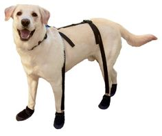 Always wondered if I could keep boots on my dog... look what they have !!!! Canine Footwear Suspenders Snuggy Boots for Dog, Small, Black Canine Footwear Suspenders,http://www.amazon.com/dp/B00B7HEQPA/ref=cm_sw_r_pi_dp_1Xx-sb00DQ5NP33B