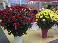 HIGH END ROSES , AVAILABLE AT SANTA MARIA FLOWERS