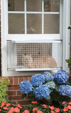 Cat Veranda Window House - CatsPlay.com - Fun furniture, condos and climbing gyms for cats and kittens.