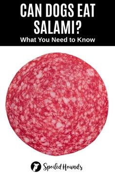 Can dogs eat salami? Keep your dog safe and find out what you need to know about dogs eating salami sausage. #dogsafety #doghealth #dogs #doglovers #doginformation #dogownertips #pethealth #salami Homemade Dog Treats, Healthy Dog Treats, Dog Treat Recipes, Dog Food Recipes, Dog Nutrition, What Dogs, Dog Safety, Can Dogs Eat, Dog Care Tips