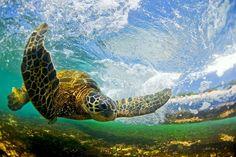 Il plonge dans les vagues pour les capturer de l'intérieur, des photographies…