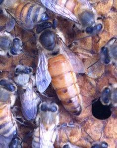 treatment free bees