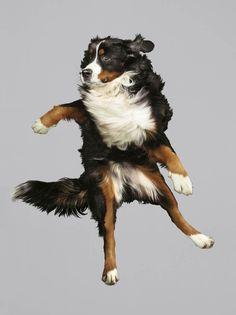 Fotógrafa mostra seu trabalho feito com cachorros voando