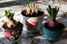 DIY : planter dans une tasse