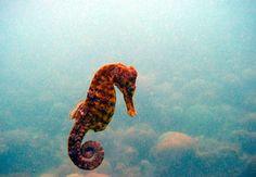 aquatic equestrian