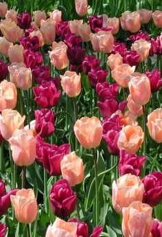 Sweet april showers do spring may flowers thomas tusser photograph flower mightylinksfo