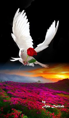 Biblical Art Flowers Nature Beautiful Pictures Beautiful Dream Beautiful Birds Animals Beautiful Beautiful Places Peace And Love Morning Love Quotes Dove Images, Dove Pictures, Pictures Of Christ, Nature Pictures, Beautiful Love Pictures, Beautiful Dream, Beautiful Birds, Animals Beautiful, Beautiful Rose Flowers