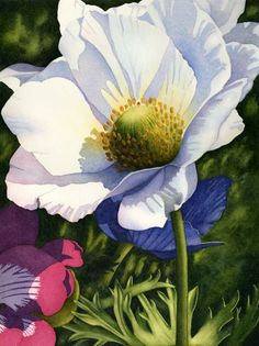 White Anemone #3 Watercolor by Chris Beck