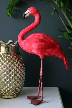 Rockett st george flamingo