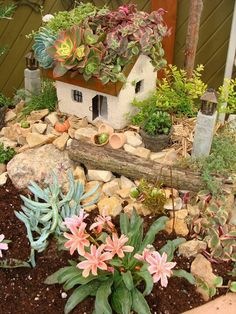 Jeremie | Miniature garden house with succulent roof and front yard garden accessories.