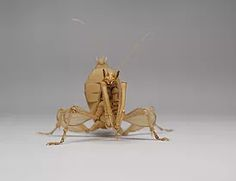 Hymenopus coronatus-04