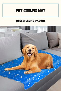 Pet Cooling Mat for dogs can help your dog relax on hot days or after an enjoyable play session with others. It can provide a fun spot for dogs to lie down while you hang out at the backyard, by the pool, with the whole family. #coolingmatfordogs #coolingmattresstopper #coolingmattresspad #coolingmatfordogsdiy #coolingmat Pet Cooling Mat, Dog Leg, Best Mattress, Dogs Golden Retriever, Hot Days, Happy Dogs, Large Dogs, Hanging Out, How To Fall Asleep