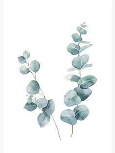 Watercolor Flowers Discover Eucalyptus Leaves Photographic Print by LotusPrintShop Watercolor Plants, Watercolor Leaves, Watercolour Painting, Watercolor Wedding, Botanical Art, Botanical Illustration, Watercolor Illustration, Art Floral, Flower Art