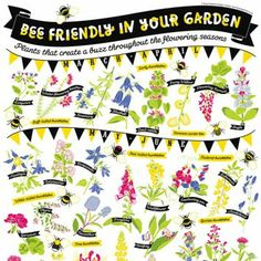 Organic cotton tea towel showing British bees, and flowers to attract them in the garden. Stylish gift for a cotton wedding anniversary.