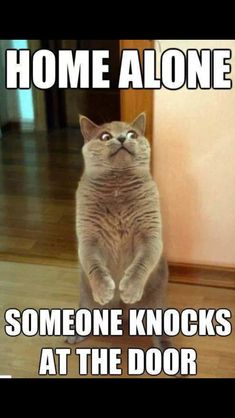 Home Alone. Someone Knocks At The Door funny lol humor funny pictures funny pics funny images funny animal pictures funny animal memes really funny pictures funny pictures and images funny animal captions funny animal pics with captions Memes Humor, Funny Animal Memes, Cute Funny Animals, Funny Dogs, Cat Memes Hilarious, Funniest Animals, Pet Memes, Funny Pranks, Scary Pranks