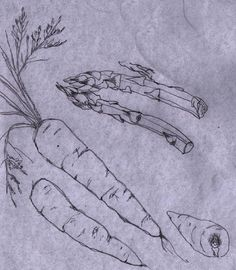 veg snketch copy.jpg #sketching #art #journal #pencil #line #drawing #vegetables #still #life #stilllife #simplicity #study #forms #shapes #fennel #carrots #beetroot #asparagus delicate #sensitive #observational #drawing #techniques #learn #wordpress #eastwitching