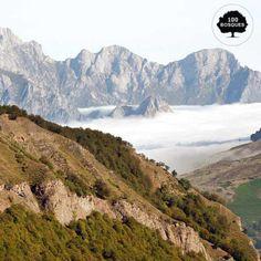 Picos de Europa. Situado entre las comunidades autónomas de Castilla y León, el Principado de Asturias, y Cantabria. Su flora es subalpina por encima de los 1.600 metros. Por debajo de esta cota encontramos bosques de hayas. También crece el roble, el fresno, el avellano, el arce, el tilo y el castaño.