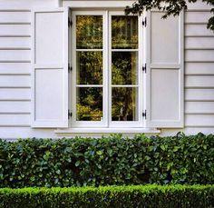 Window box hedge