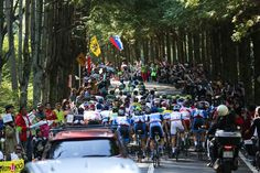 Japan Cup 2014 Cycle Road Race