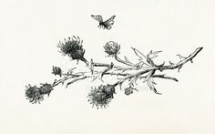 Thistle Branch Bee Etching