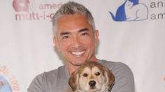 """Image copyright                  Getty                  Image caption                     César Millán es un entrenador de animales que escribió libros sobre problemas caninos y saltó a la fama en televisión conocido como el """"Encantador de perros"""".   Por un video en el que un perro ataca a un cerdo, el famoso presentador de televisión César Millán, conocido como el """"Encantador de perros"""", es investigado por crueldad animal. E"""