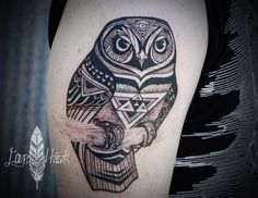 Owl. David Hale.org