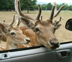 drive-thru zoo, harmony park safari, huntsville alabama. USA