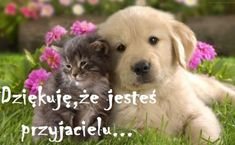 cats and dogs of cats and dogs Funny love of cats and dogs Cats and dogs are two war animals but on the other hand when they show affection for each other they are also extremely on Pet Lovers Gud Morning Pics, Good Morning Sunday Images, Good Morning Love, Good Morning Messages, Morning Pictures, Morning Quotes In English, Golden Puppy, Love Hug, Happy Mother S Day
