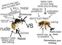 Hornet better