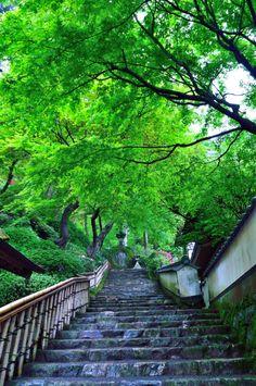 Daikouzen-ji Temple, Saga, Japan