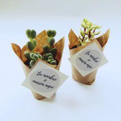 Mini-árboles de distintas variedades