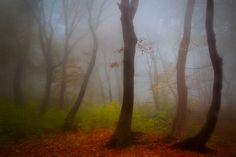 Thru The Fog by Serban Bogdan, art work World's Biggest, Photo Galleries, Forests, Tripod, Gallery, Art Work, Outdoor Decor, Woods, Artist