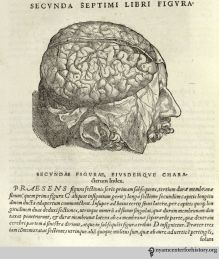 Brains, Brawn, & Beauty: Andreas Vesalius and the Art of Anatomy Andreas Vesalius, The Inquisition, Vintage Medical, A Level Art, Brain, History, Illustration, Artist, Septum