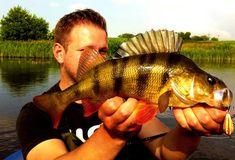 Infos für Angler über Barsche