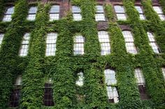 ivy-covered-building-2-1392371-m.jpg (300×200)