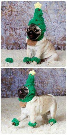 Puggy prance! Too cute!!