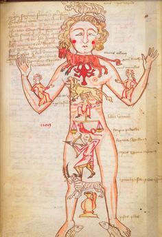 Zodiac Man: Man as Microcosm in the Medieval Worldview [Homo Signorum; Medieval Medicine and Astrology; Medieval Manuscript, Medieval Art, Illuminated Manuscript, Astrology Numerology, Astrology Zodiac, Ancient Astronomy, Art Roman, Old Best Friends, Human Oddities